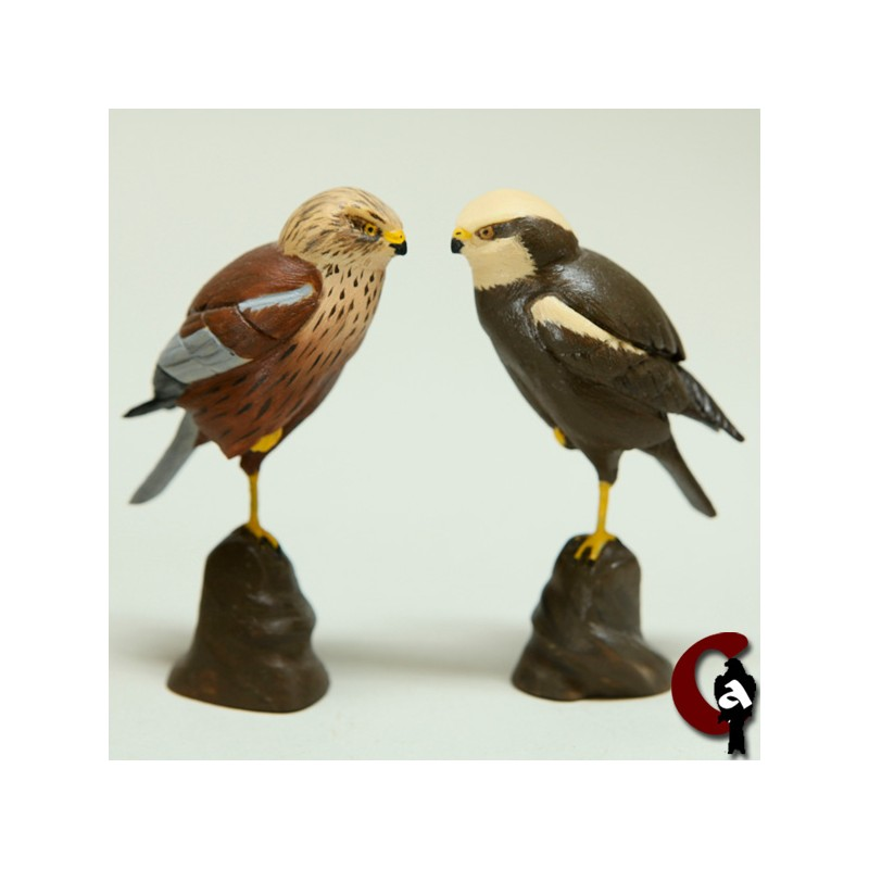 Busard des roseaux mâle et femelle