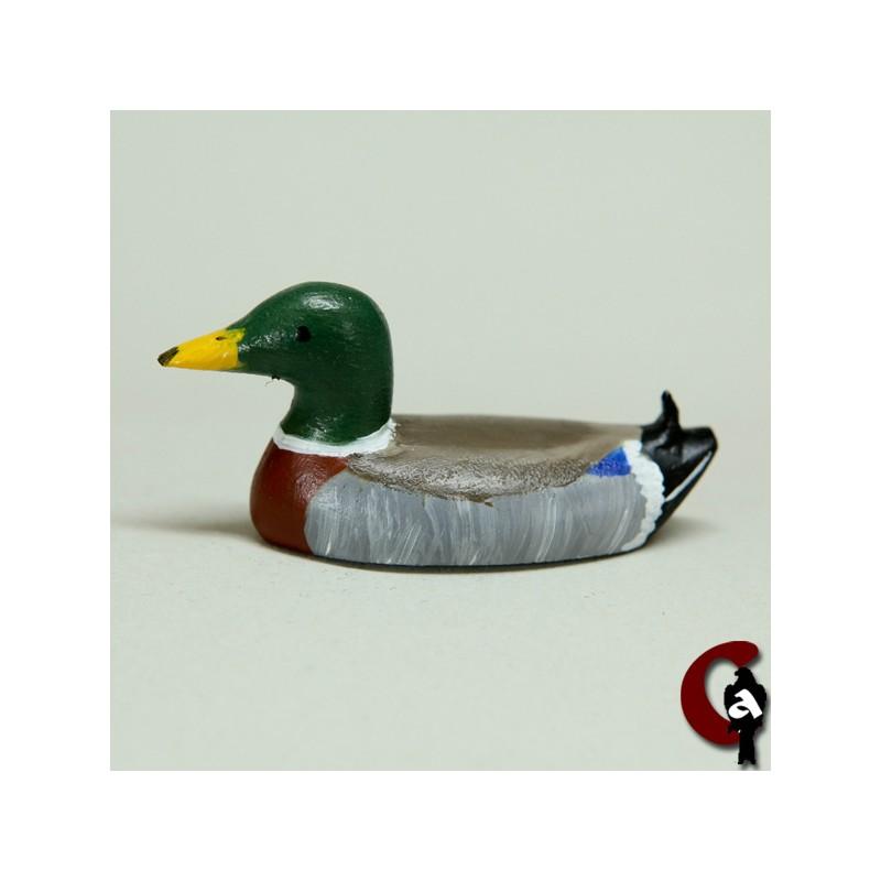 Canard colvert mâle nageant